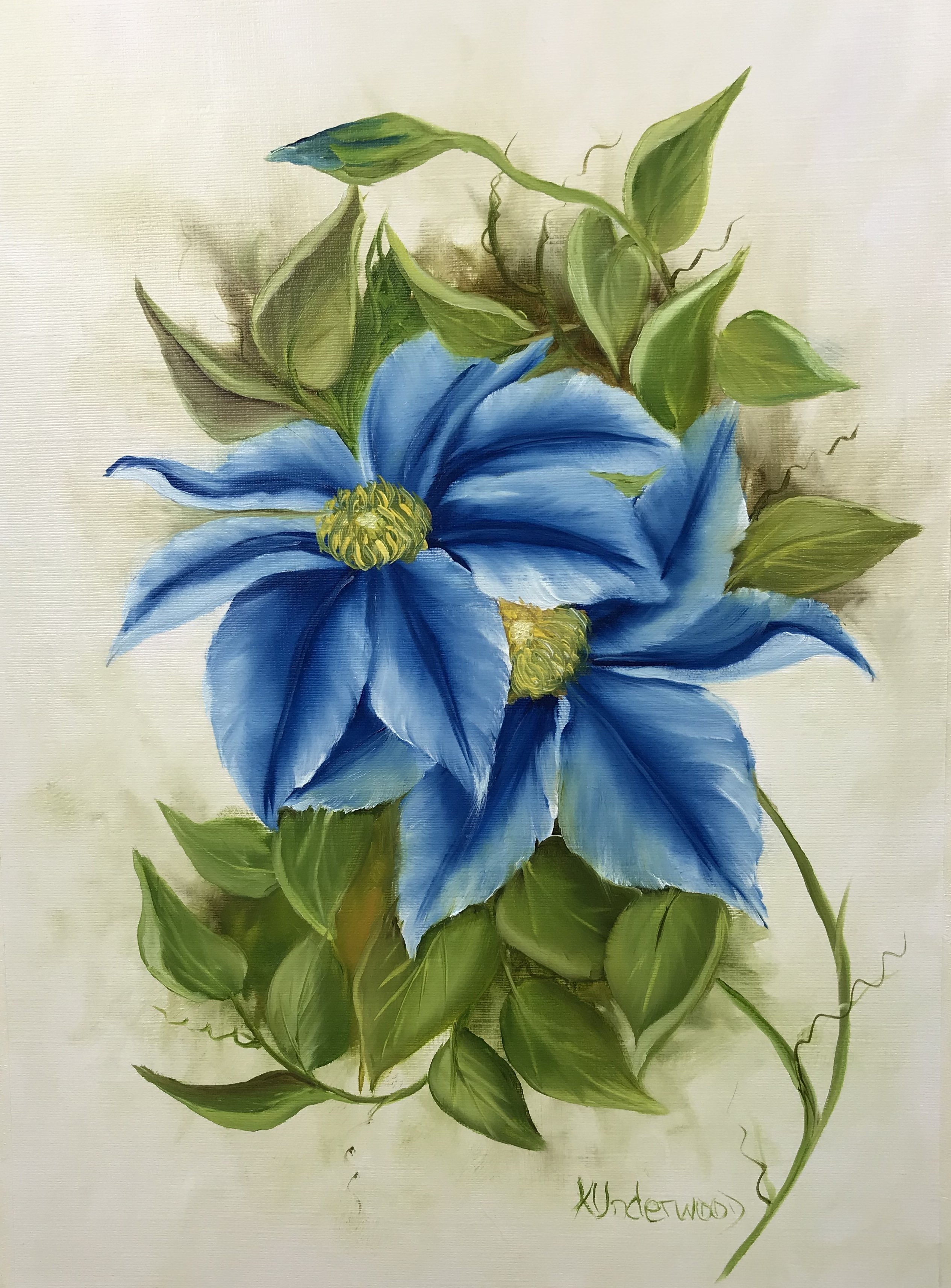 Clematis Baby Blue