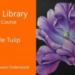 Purple Tulip – Preview