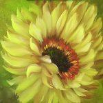 Practice Sunflower